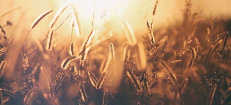 8 Aplikasi Pertanian yang Bermanfaat Bagi Petani dan Konsumen